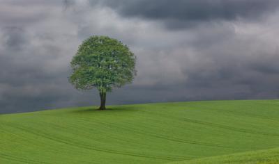 Tree on a Gloomy Day