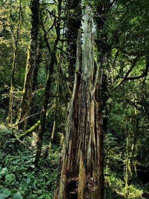 сказочный лес лес