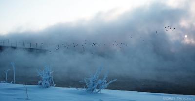 глобальное потепление, глобальное потепление... на каком же оно, интересно, глобусе? зима Ангара зимовка уток winter Angara wintering ducks
