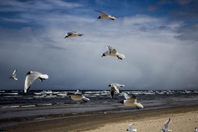 Парить Море чайки берег волны ветер пляж