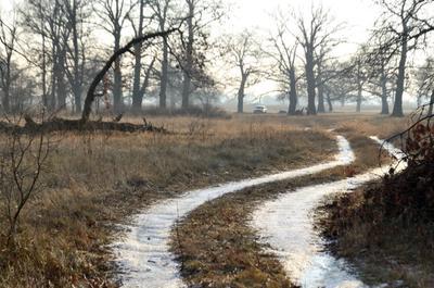 Извилины деревья заморозки дубы дорога извилины