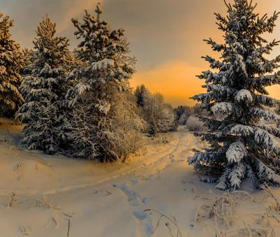 Красивое утро... Вологодчина зима деревня
