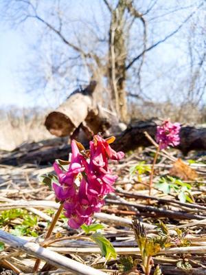 Цветы ???????????? Цветы лес день весна тепло дерево ятрышник