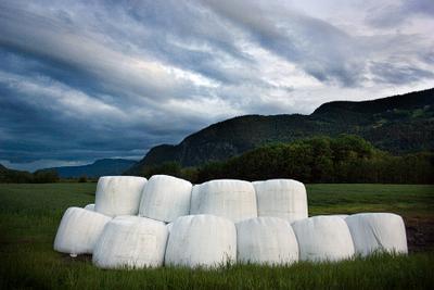Норвежская действительность Норвегия трава в рулонах