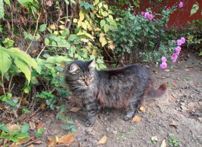 Со всех сторон какие-то шорохи... кошки осень дома