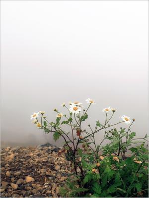 *На краю тумана* (из серии) фотография путешествие горы Роза Хутор туман осень цветы природа Фото.Сайт Светлана Мамакина Lihgra Adventure