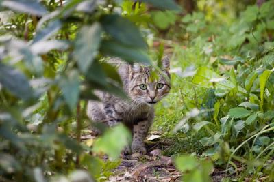 Деревенская кошка кошка, лето, деревня