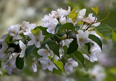Цветущий май май цветы