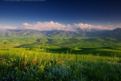 Маленькая страна высоких гор киргизия жизнь alamedin kg аламедин ала-тоо alatoo kyrgyzstan mountains flowers lazy_vlad lazyvladphoto кыргызстан бишкек bishkek