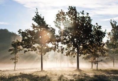 утро утро, туман, парк