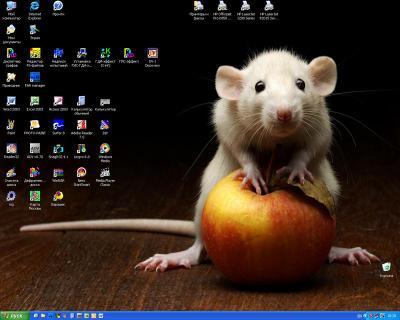 """А вдруг влезет? (на конкурс """"Мой десктоп"""") Мышь, яблоко"""