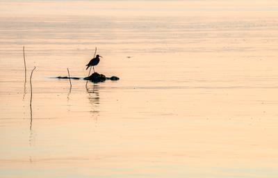На рассвете. Рассвет Вода Птица Отражение
