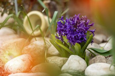 Spring disfoto цветы flower warm leica summilux
