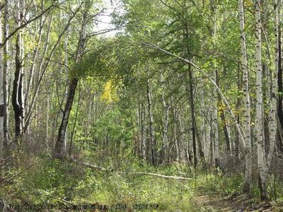 Глухой лес 2