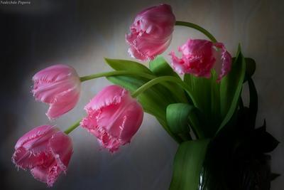 *** весна праздник цветы тюльпаны радость