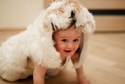 Волк в шкурке овечки шкура ребенок