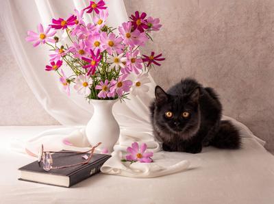 Любительница прекрасного. Космея кошка
