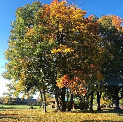 Осенние краски...