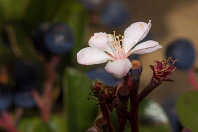 *** растения природа цветы израиль полевые