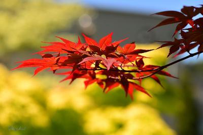 Весенние краски весна