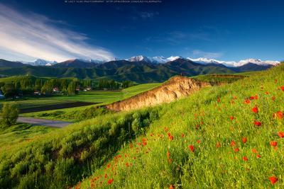 Рассвет настоящего фотографа киргизия бишкек ала-тоо горы май маки горные цветы lazy_vlad lazyvladphoto t_berg birthday