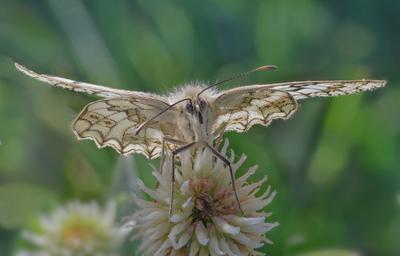 Бабочка бабочка цветок насекомое макро