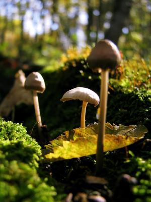 Грибное царство грибы, гриб, лист, макро, осень, мох