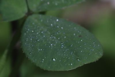 Листок, покрытый росой Роса лист капля утро