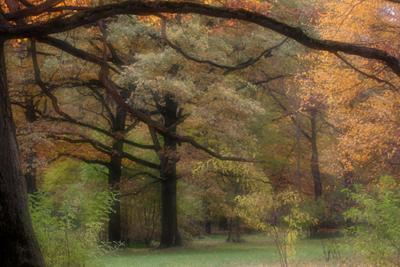 Лукоморье Сказочный лес