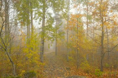 Золотые россыпи туманным утром Туман осенние деревья каменная тропа