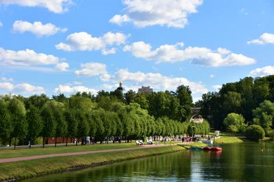 Царицыно утро город мост парк лето пруд