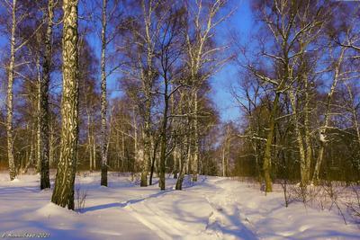 Мартовский день пейзаж природа март лес