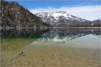 Озеро для одной утки