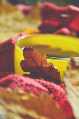 Чайная зарисовка осени
