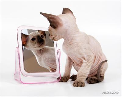 Открытка сюсипусичная - 2 . котёнок кот зеркало