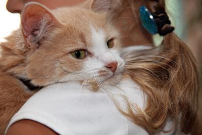 На родном плече кошка кот животные