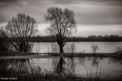 Разлив 3 Весна Апрель Река Ока Разлив Муром День Дождь Пасмурно Отражения Деревья Облака