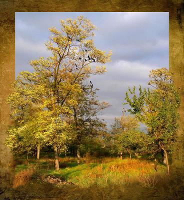 осени дни сочтены осень желтые деревья кусты лес птицы небо