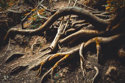 Сплетение дерево корни природа мощь красиво