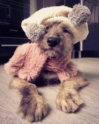 Московская осень -2 Осень холода щенок собака волкодав