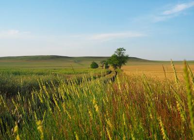 Краски лета пейзаж дерево поле