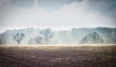 туман и солнце поле туман контрсвет