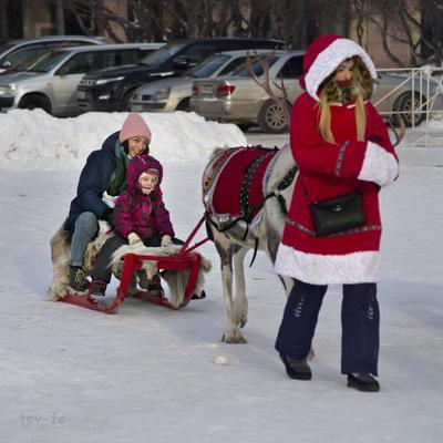 А олени лучше девушка город зима олень Рождество