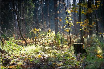 Октябрь в лесу Павловск, октябрь, утро, лес