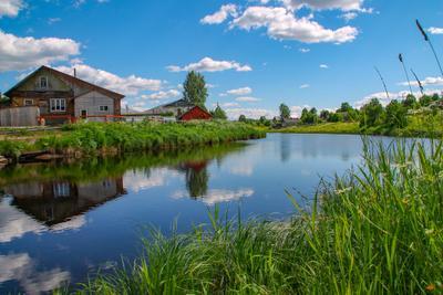 Река Леденьга. Вологодская область. Река природа отражение в воде пейзаж