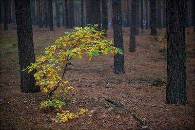 Свой среди чужих Лес осень