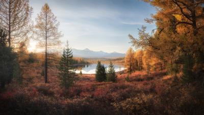 Золото Киделю алтай горный горы озеро киделю курайский хребет улаганский район золотая осень лиственницы тайга altai mountains