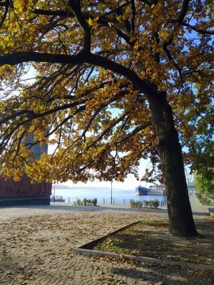 Ноябрьское утро осень ноябрь дуб набережная днепр