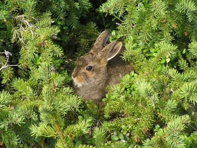 Зайченок заяц природа