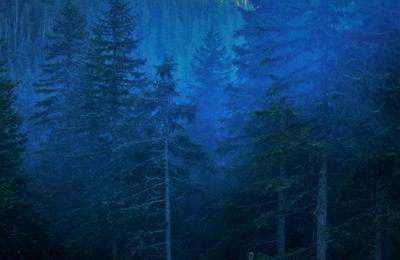 В гостях у лесных Духов. горы тайга лес пейзаж